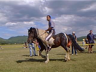 Konjske Utrke